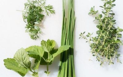 The Top 5 Best Herbs for Digestion & IBS